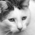 Tierkommunikation Intensiv Ausbildung